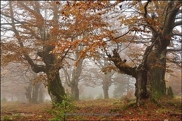 Copacii fara padure