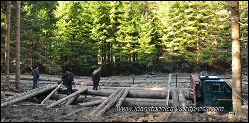 incarcam camionul cu lemne