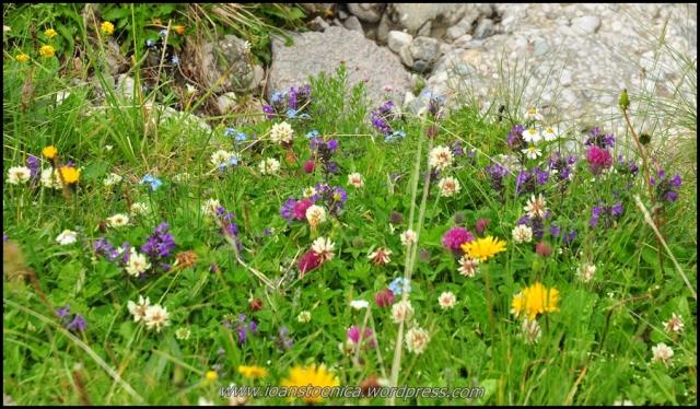 gradina botanica a bucegilor
