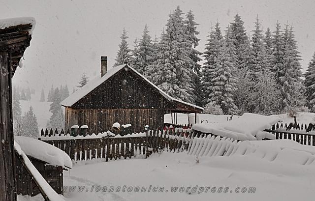 ninsoare abundenta in hasmas
