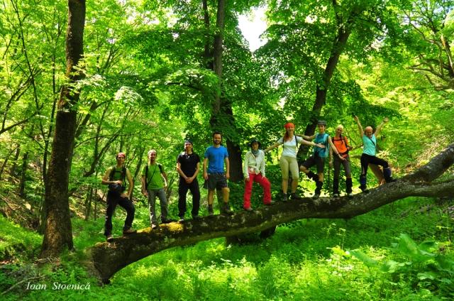grup pe copac