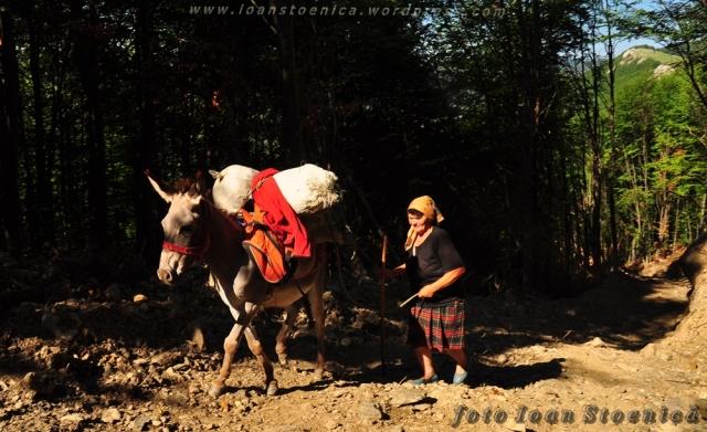 femeie cu magar in padure