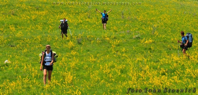 intre florile galbene