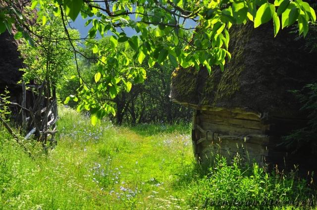 alee cu iarba printre case