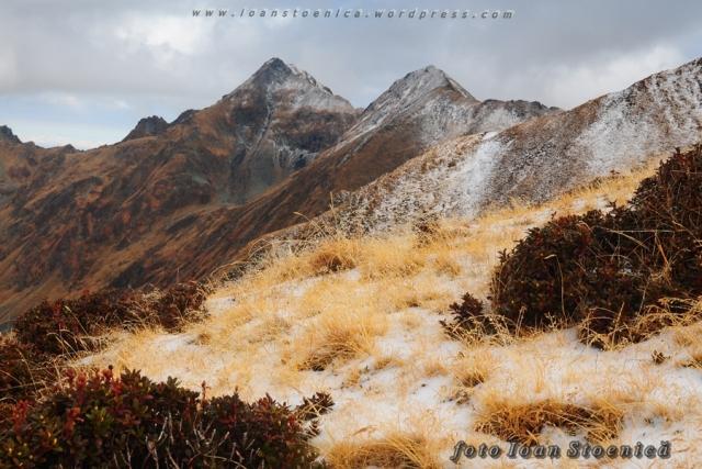 iarba si zapada cu creste pe fundal