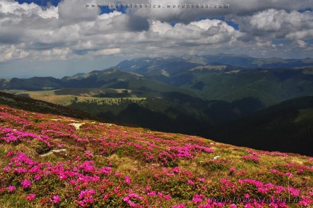 fotografii frumoase de la munte