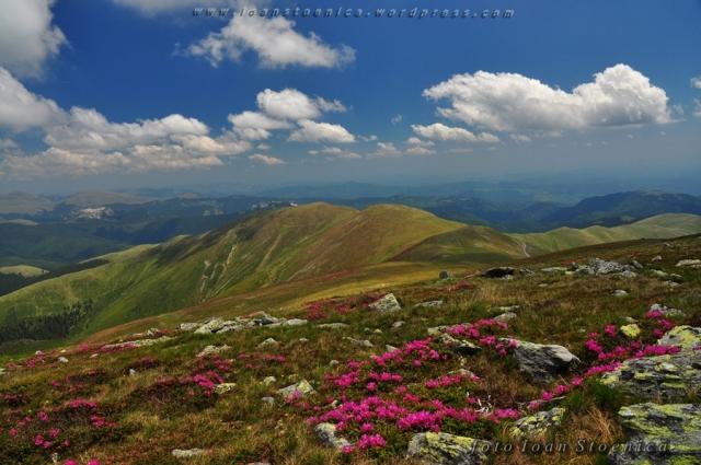peisaje din muntii romaniei - leaota