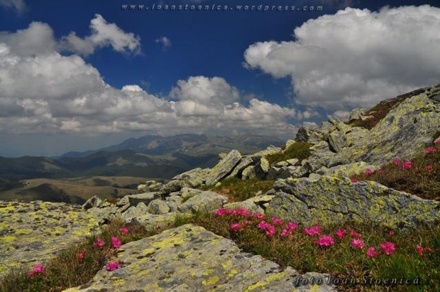 lespezi si flori pe munte - leaota