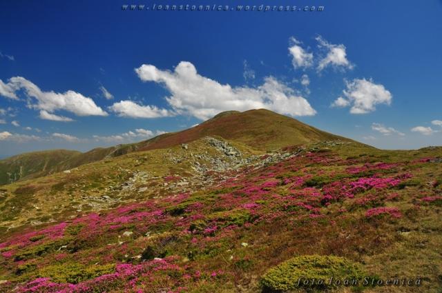 muntele roz, cerul albastru