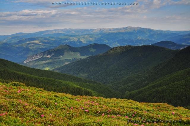 peisaj in muntii leaota