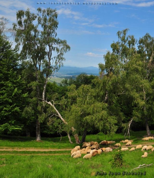 turma de oi si copaci