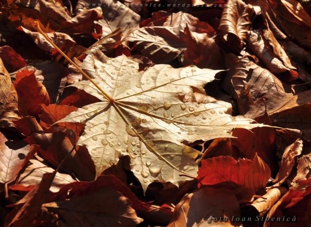 stropi de roua pe frunza