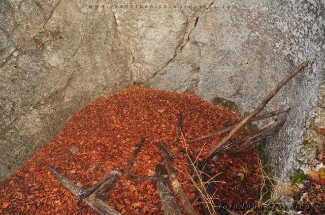 ruine - cetatea codlei (magura codlei)