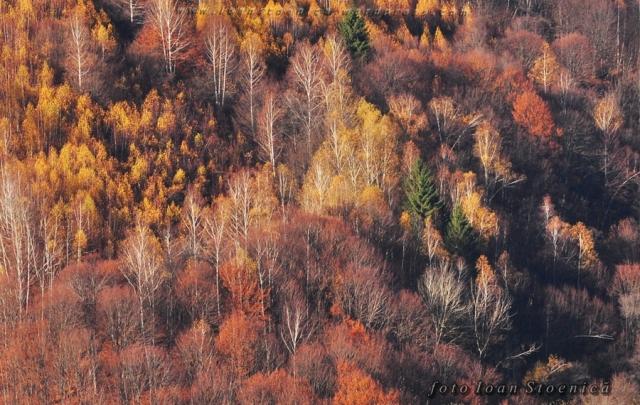 combinatii de arbori - toamna