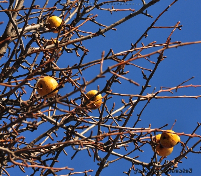 pere in pom