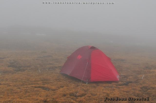 cort in ceata