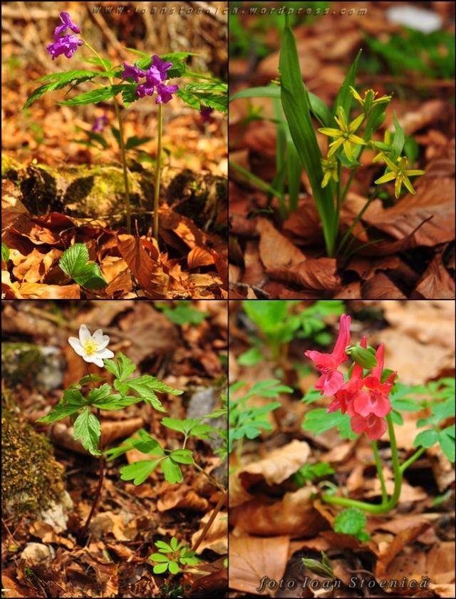 fotografii cu flori din padure