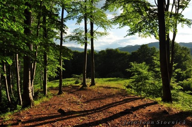 soare printre copaci