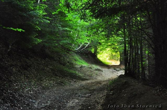 drum tunel printre crengi