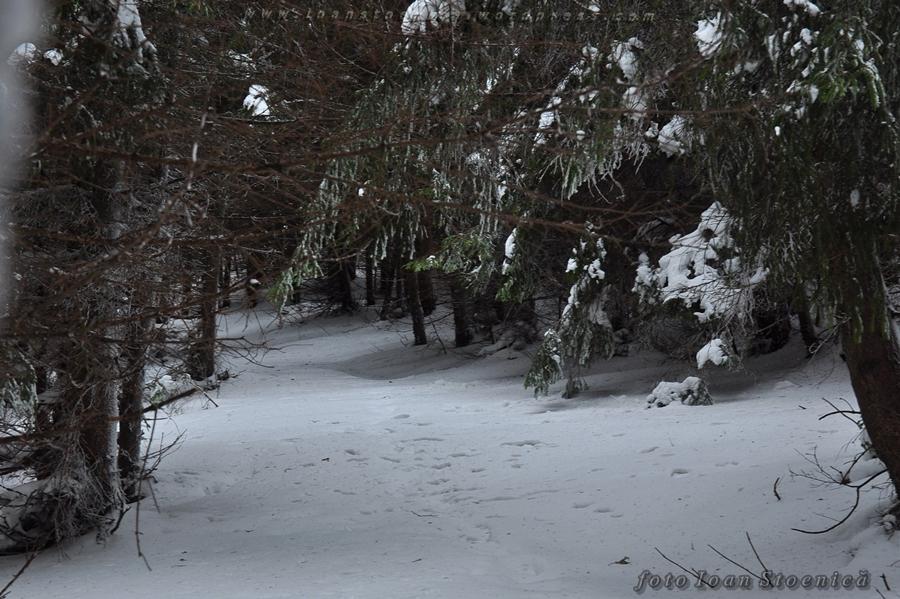 tunel in padure iarna