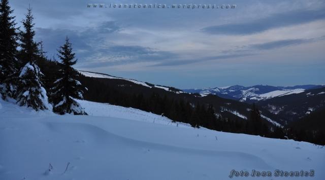 poiana alba in muntii bistritei