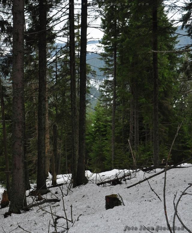 orientare printre copaci