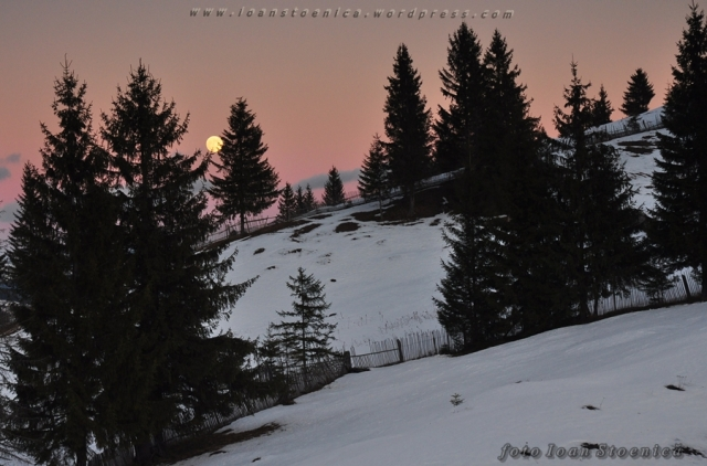 luna plina pe cer roz - bistritei