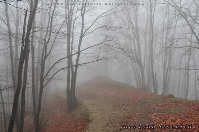 fagi in ceata