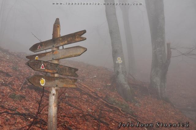 indicatoare de lemn pe munte
