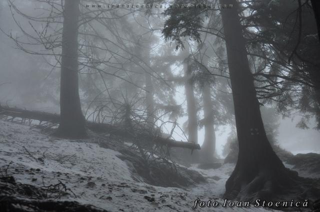 padure in ceata - cu zapada