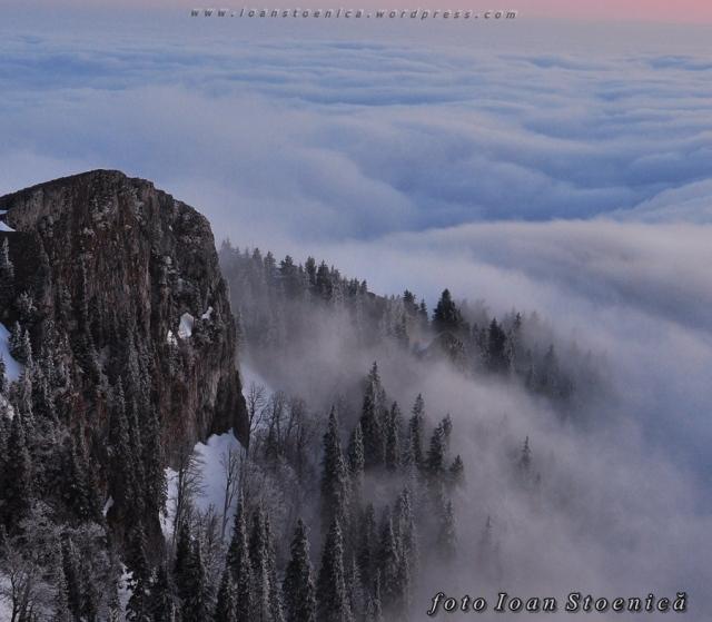 norii printre  brazi - deasupra norilor