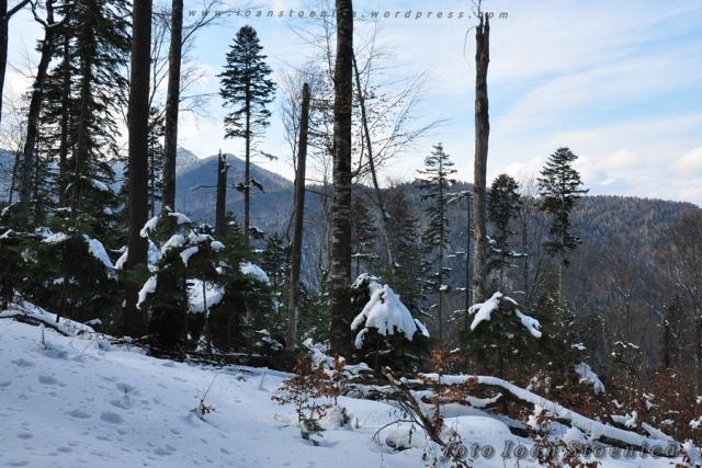 iarna prin padure