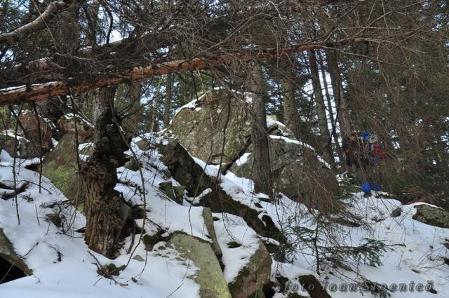 stanci in padure - muntii tarcau