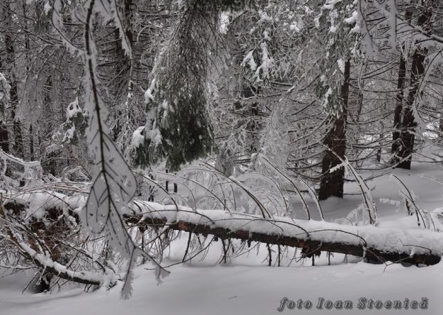 iarna in padure - peisaje frumoase