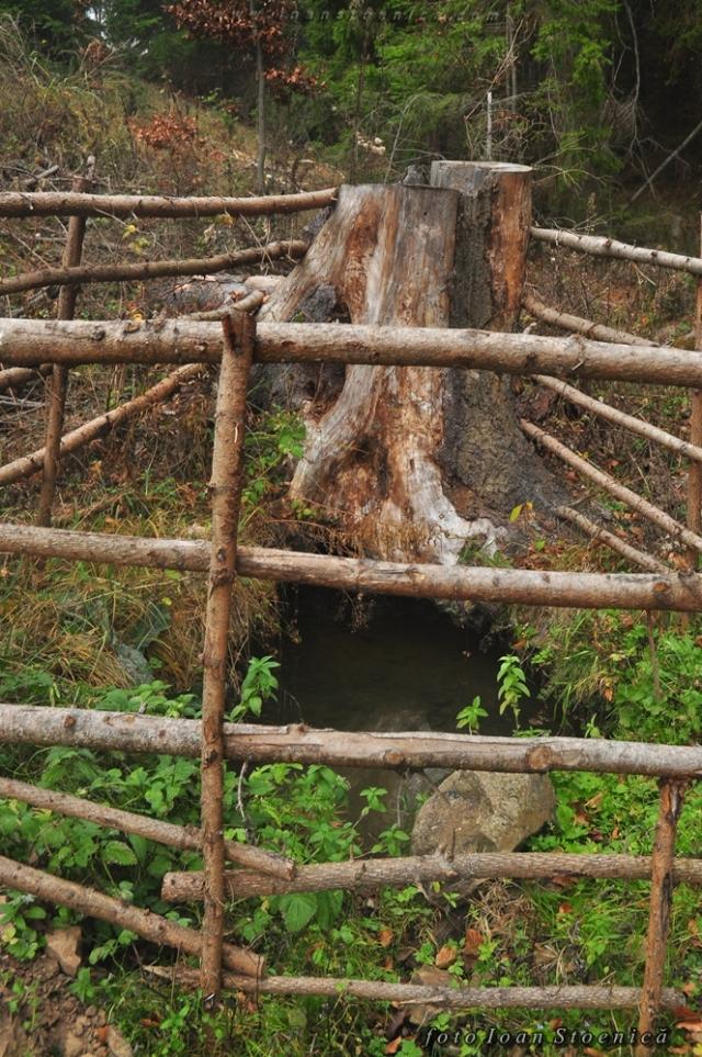 izvor langa buturuga