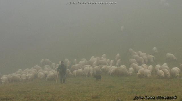 turma de oi in ceata