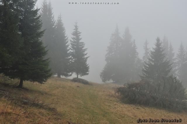 brazi in ceata - varful zancani
