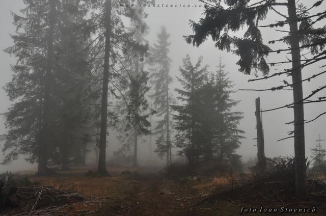 brazi in ceata - zone defrisate