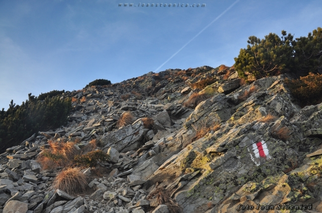 ultimul urcus spre vf pietrosu - zona cu pietre