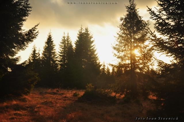 soare intre copaci