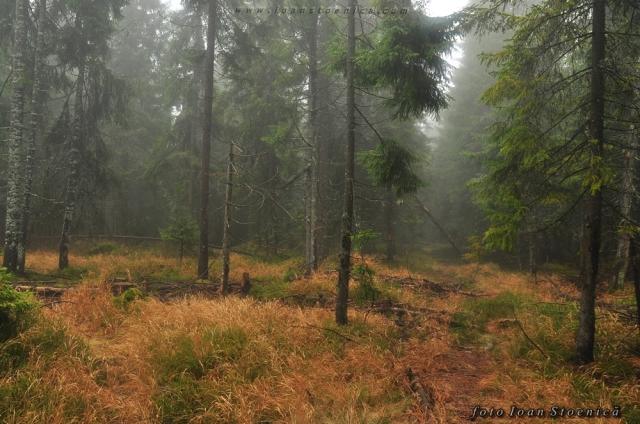 padure cu ceata