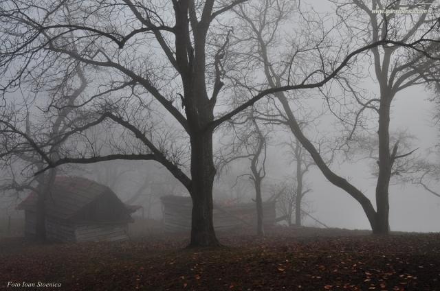 casa ceata