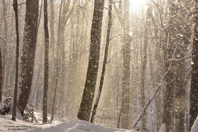ninge cu soare in padure
